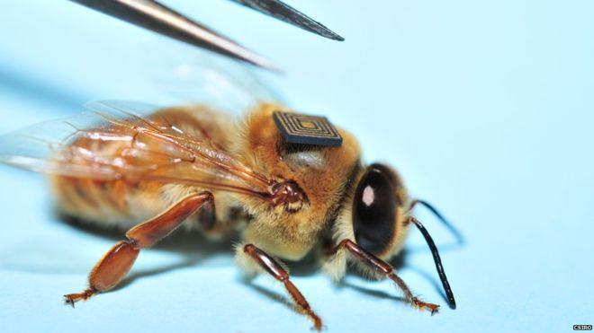 Researchers are using micro sensors to learn about the problems bees face. PHOTO: BBC