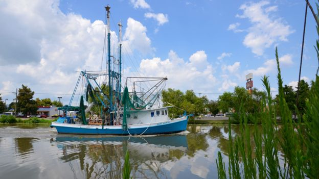 A shrimp boat heading out to fish on Bayou Lafourche. PHOTO: BBC