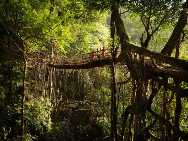 """New Zealand-based photographer Amos Chapple captures a """"living bridge"""" deep in the forests of Meghalaya, India."""