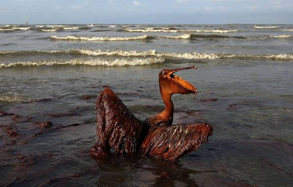 Waste like human hair, sawdust and bird feathers can clean oil spills from water. PHOTO:  Nation of Change