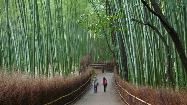 "A few years ago the Ministry of Environment included the Sagano Bamboo Forest on its list of ""100 Soundscapes of Japan"" -- a selection of everyday noises intended to encourage locals to stop and enjoy nature's music. PHOTO: CNN"