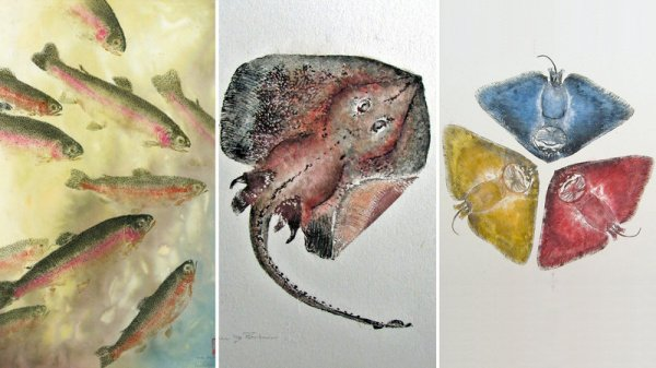 Gyotaku, the art of making inked prints from real fish, originated in 19th century Japan. Above, three examples from modern Gyotaku artist Heather Fortner (from left): Under the Rainbow Rainbow Trout; Little big skate and Primary colors butterfly ray. Courtesy of Heather Fortner