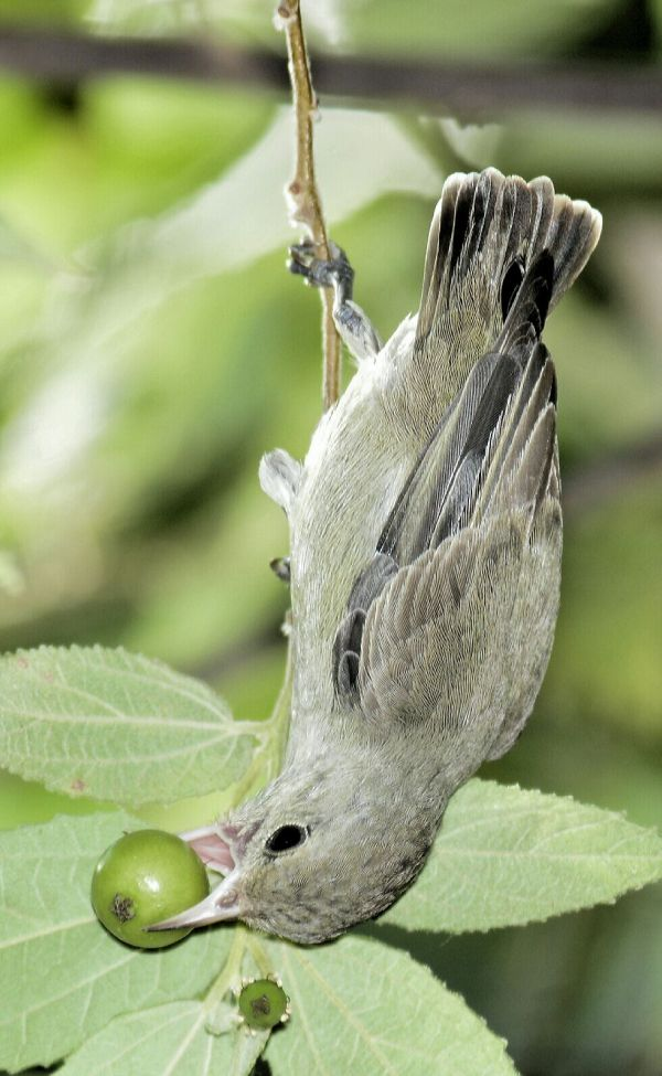 Flowerpecker by Vijaykumar Thondaman - RAXA Collective
