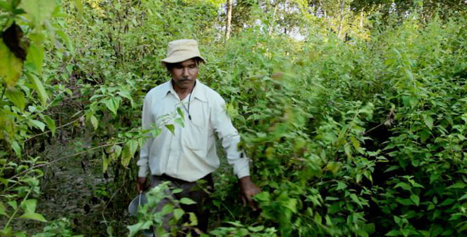 "Indian man, Jadav ""Molai"" Payeng, has single-handedly planted a 1,360 acre forest In Assam. PHOTO: Jagran"