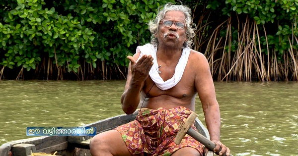 Pokkudan's pursuit of mangrove conservation started back in the 80s when he started collecting mangrove seeds and planting them in the marshy lands of in Pazhayangadi. PHOTO: Mathrubhumi