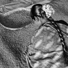 Selecting beans for export in India.PHOTO: Sebastiao Salgado