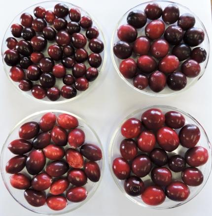 cranberry6