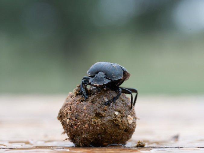 baird_beetle-5336-1--e98afd45ca45c51af0b6ec49cc8417c456611fbb-s1400-c85
