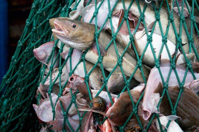 overfishing_custom-1e6a0790cb0cea389c8c2aa9c4927c8b6f5686a1-s1400-c85.jpg