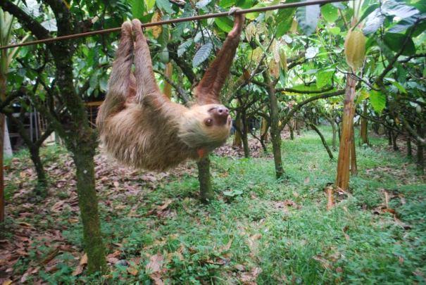 sloth_zpsz5rmsghb