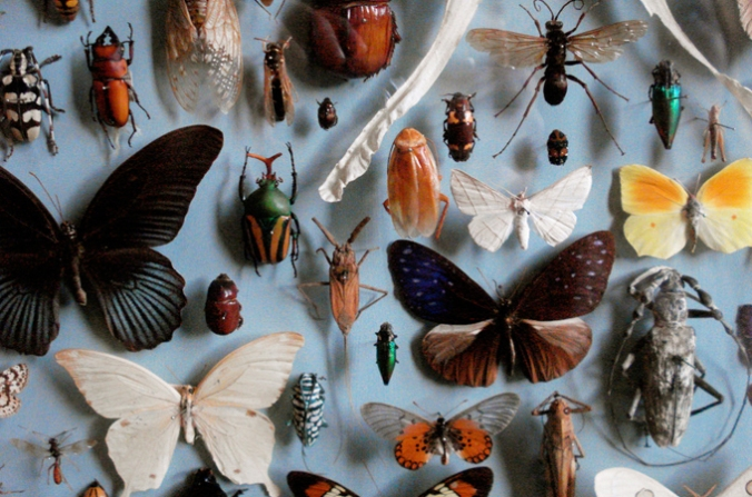 natural-history-collection1.jpg