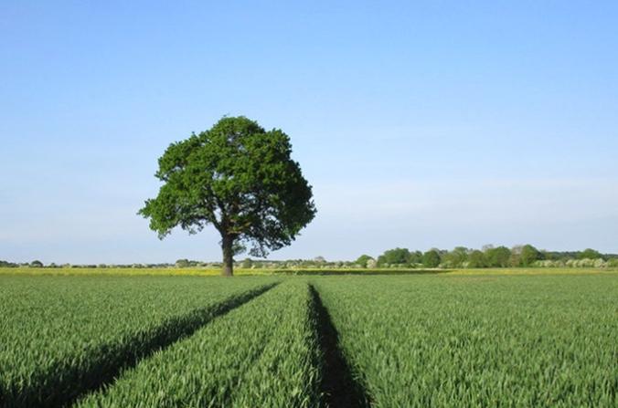 tree-on-farm