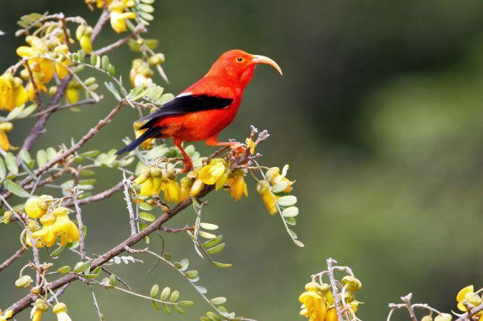 Specter-Gene-Drives-And-Endangered-Birds-1200.jpg