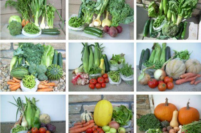 veggiegarden_cropped-680x450