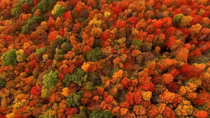 26tb-foliage-superjumbo