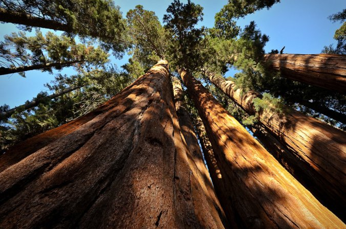sequoias-1_custom-9d831bf09949d38d3d16746b895b30fc2bfa786a-s1100-c85.jpg