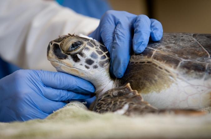 sick-turtle.jpg