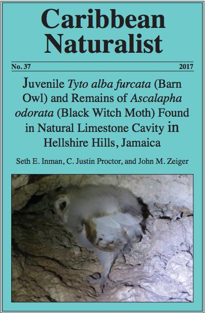 Caribbean Naturalist Tyto alba Hellshire Hills