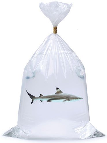 shark-in-bag