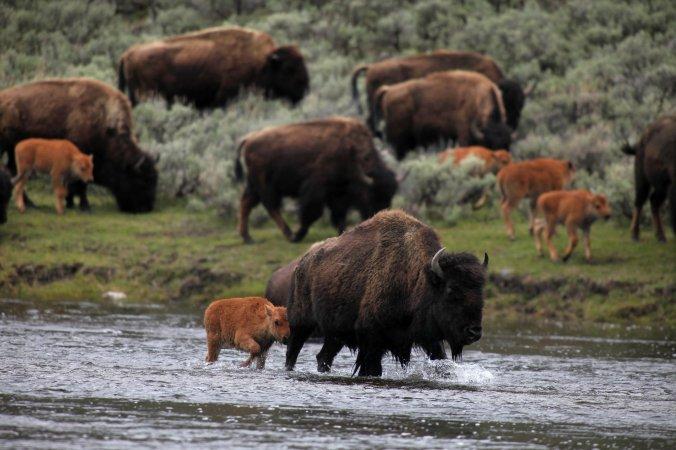 14tb-bison-superJumbo.jpg