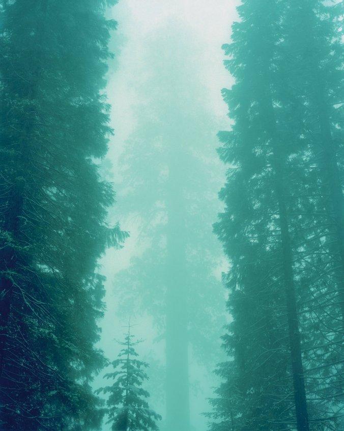 26mag-26sequoias-t_CA0-jumbo.jpg
