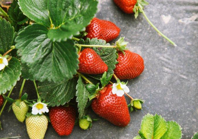 19berries-1-superJumbo