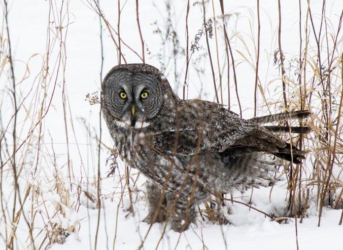 owl-baiting-9_custom-eff377db1531b3a9380239392d03516bf9b06f7f-s1400-c85