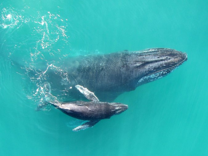 whispering-whales-1-737094c2b8f1aaac28bc47183219c85f80bea1a7-s1400-c85.jpg