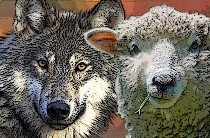 wolf-and-sheep.jpg