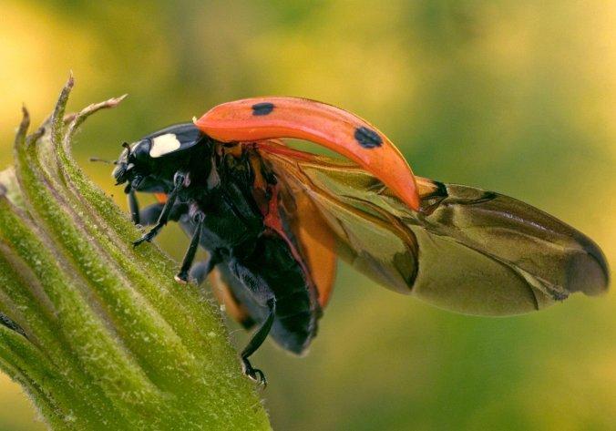 19tb-ladybugs01-superJumbo.jpg