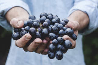 bunch-of-grapes (1)