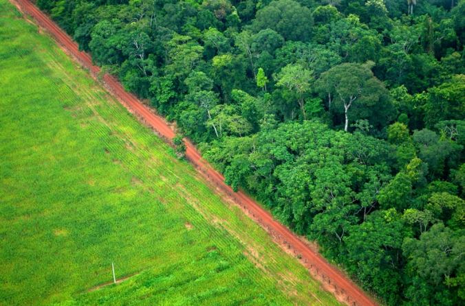 deforestation-and-agriculture.jpg