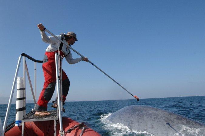 08tb-whales01-superJumbo.jpg