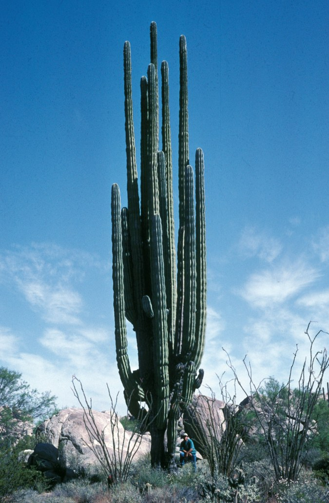 Kormann-Cacti-Rebman-P04198-new