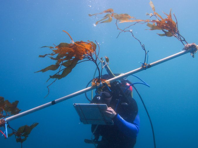 underwater-3_david-ginsburg_custom-97dbae965986d1d3a1c7f69ddc5967e3ddd1e31d-s1300-c85