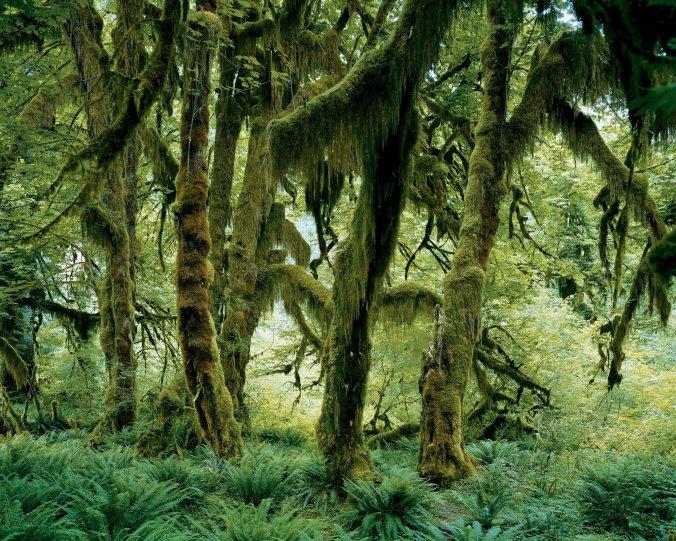 rainforest-slide-IB5C-superJumbo