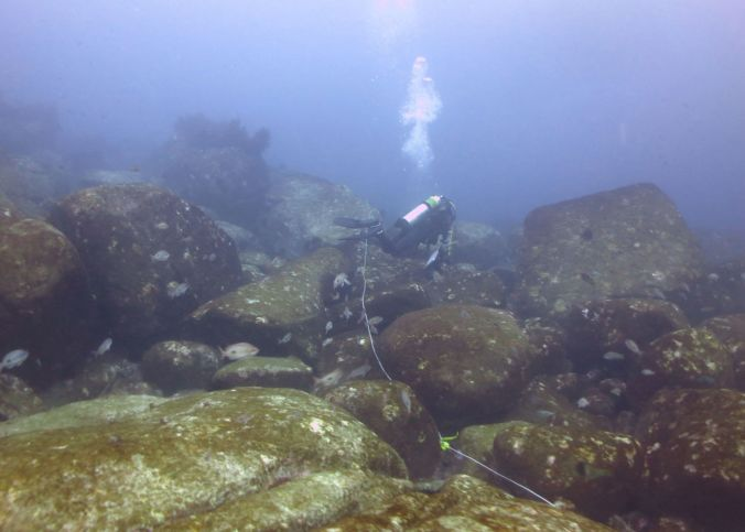 Diver_surveying_overgrazed_reef_web