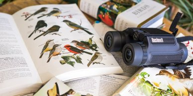 field-guide-to-birds-top-2x1-lowres1024-1702
