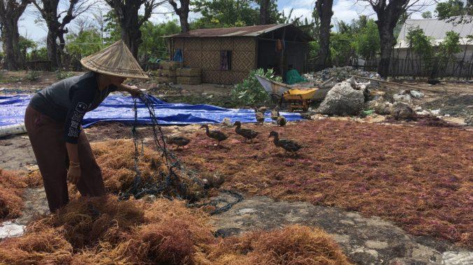 Seaweed-harvesting-Takalar-4-e1518046448442-1260x708