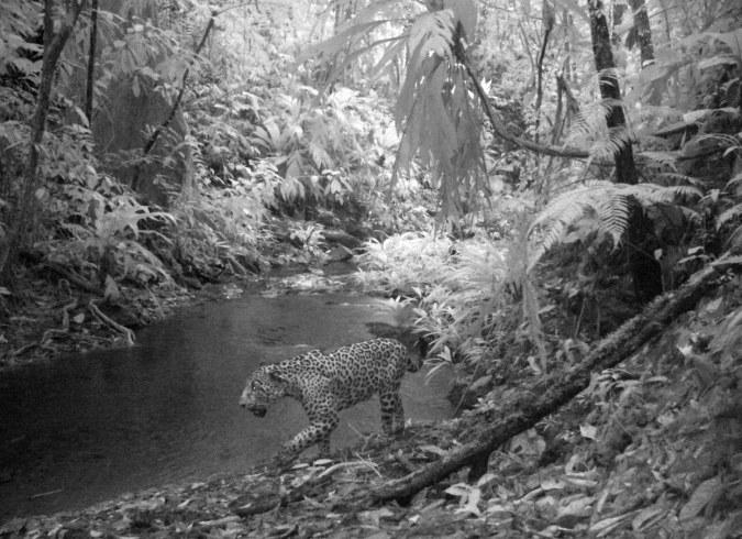 Preston-Ecological-expedition-Honduras-8