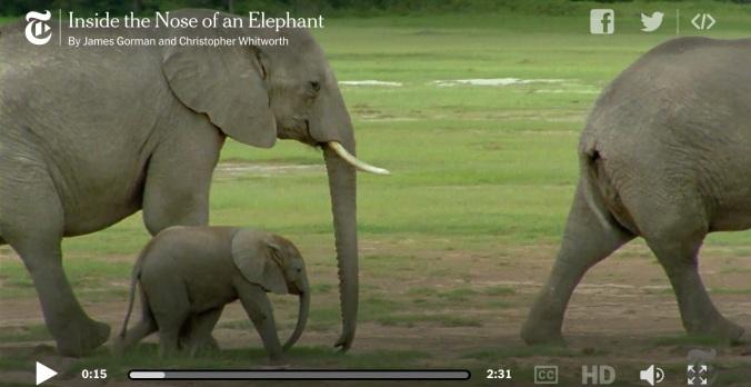 ElephantNose.jpg