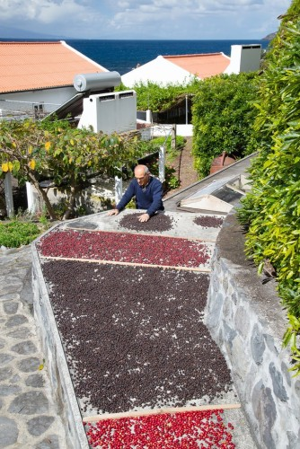 Manuel Nunes drying his farm's coffee beans. Credit Caryn B. Davis for The New York Times