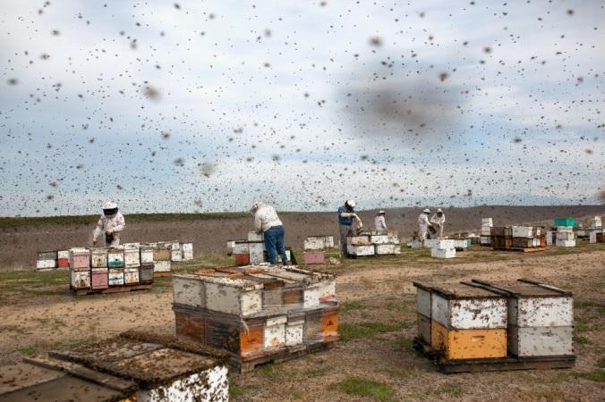 19mag-bees-slide-5XCH-jumbo