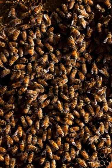 19mag-bees-slide-VMUN-superJumbo