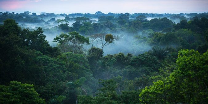 Brazilian_amazon_rainforest_web