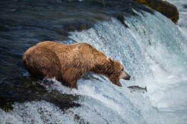 Riederer-Bear-Cam.jpg