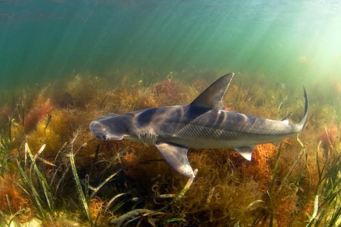 07tb-sharks-jumbo.jpg