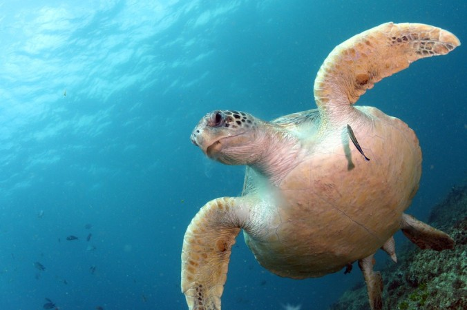 14TB-SEATURTLES1-jumbo.jpg