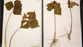 062617_Herbarium_009.jpg