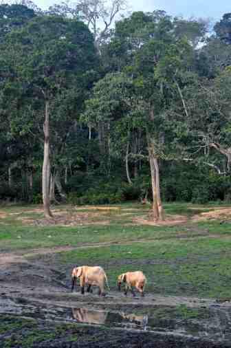 Canby-Elephant-Path-Njaia-Njoku.jpg